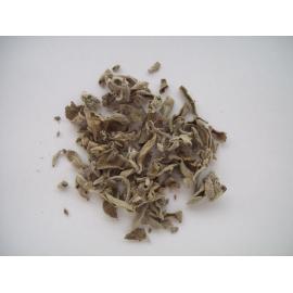 Salvia Hojas